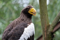 Adler-Zoo HD-12_06_2010-8095