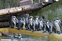 Pinguin-Zoo Landau-20_11_10-0779